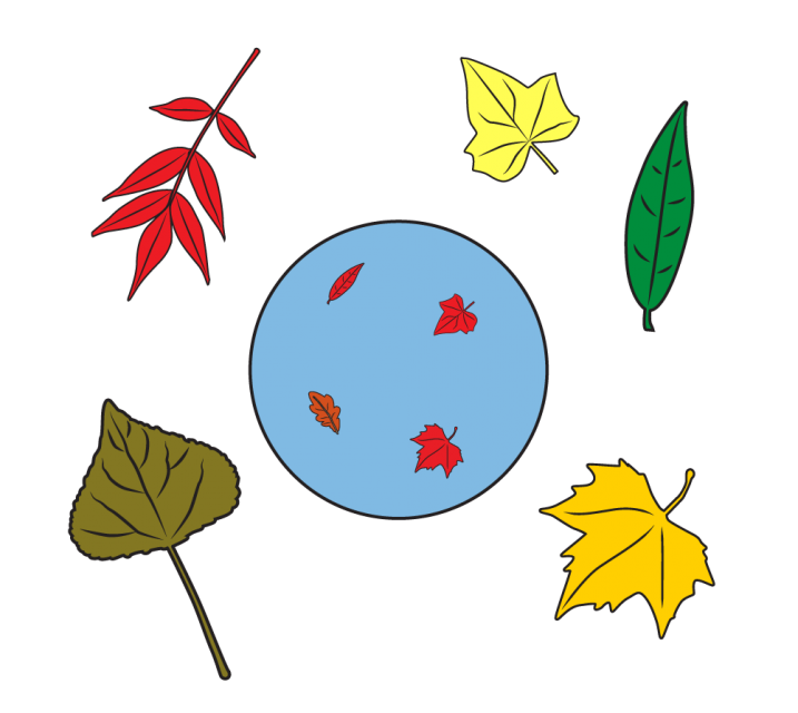Inside the circle are 4 leaves. Each leaf has a different shape. Each leaf is small and red. Outside the circle are 5 leaves. Each leaf is a different shape and fall color. Each leaf is large.