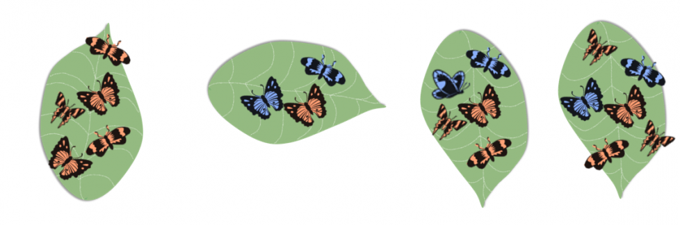 A leaf with 5 orange butterflies. A leaf with 2 blue butterflies and 1 orange butterfly. A leaf with 2 blue butterflies and 3 orange butterflies. A leaf with 2 blue butterflies and 4 orange butterflies.
